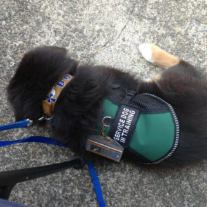 Leather cross dog collar