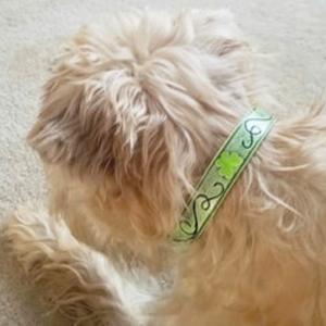 Distressed Irish Collar
