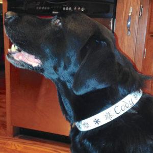 Christmas dog collar