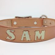 gold dog collar